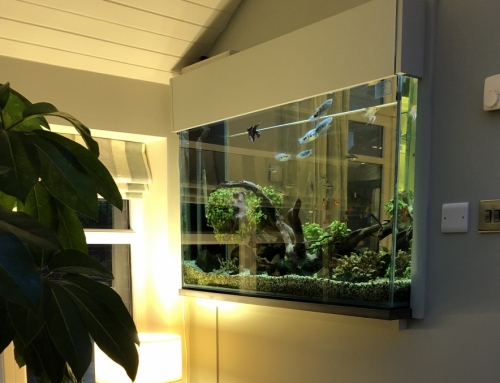 Built in through wall freshwater planted aquarium