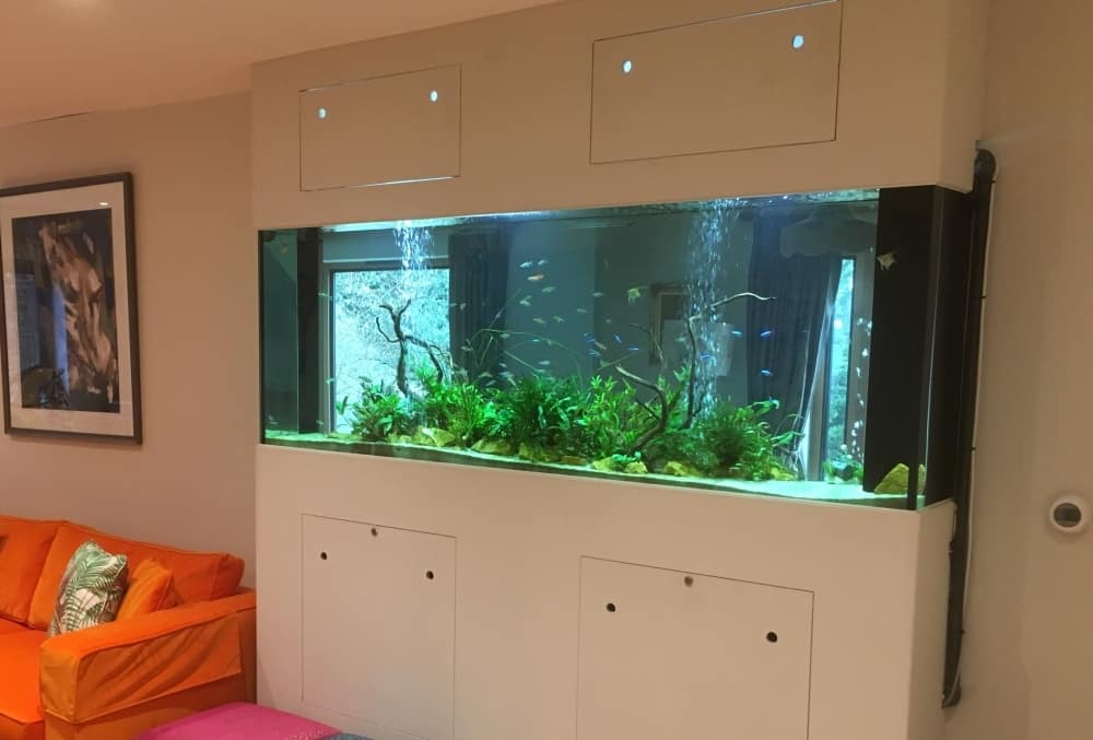 Tropical-Freshwater-aquarium-London