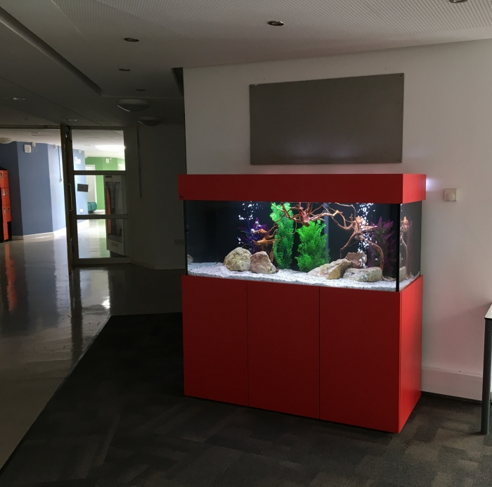 custom aquarium for school foyer