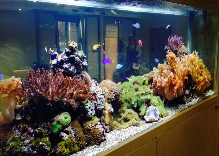 Tropical-Marine-Reef-aquarium