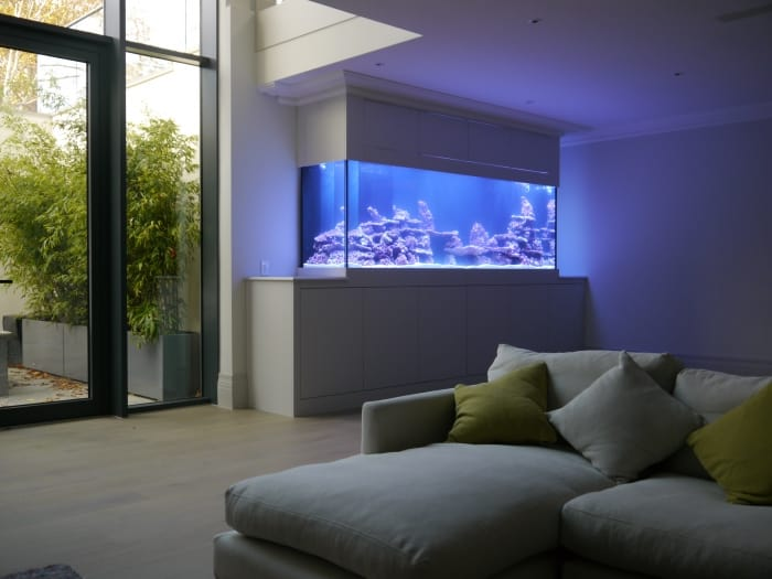 stunning aquarium in private home