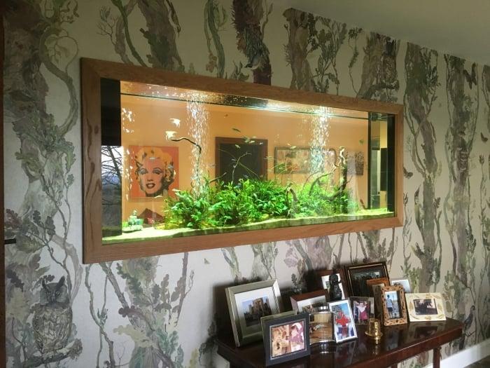 Through wall planted freshwater aquarium