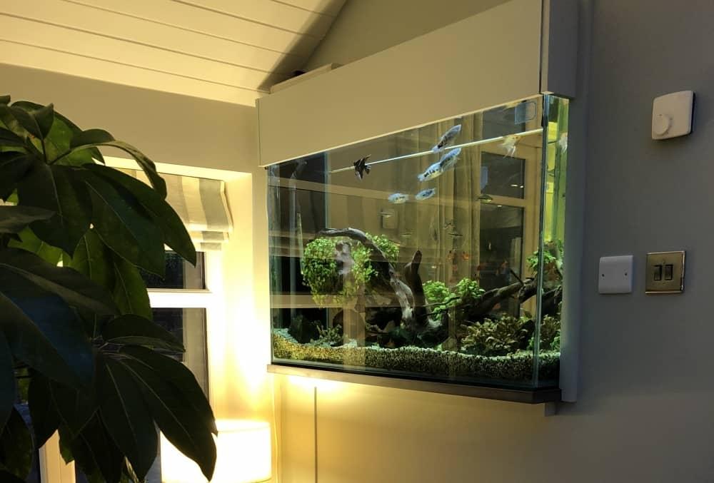 Tropical-Freshwater-aquarium