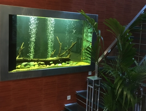 Bespoke through wall feature Malawi freshwater aquarium