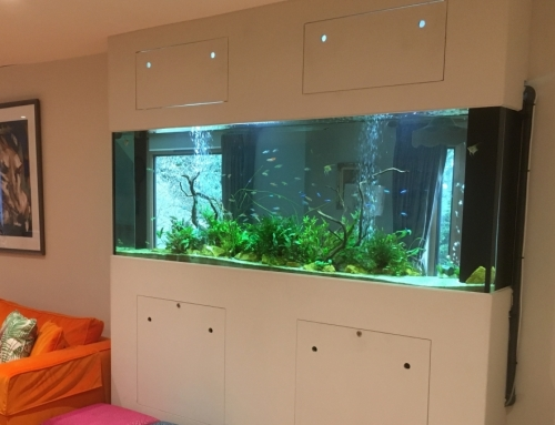 Built in, through wall feature planted freshwater aquarium