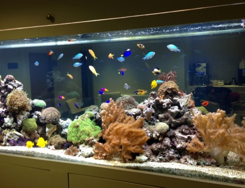 Built in through wall tropical marine reef aquarium
