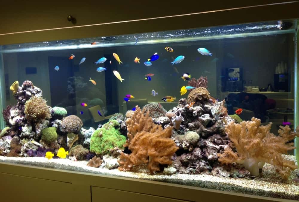 Tropical-Marine-Reef-Aquarium-Surrey