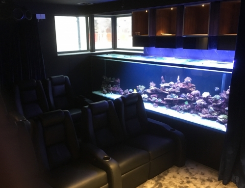 Bespoke tropical marine reef aquarium