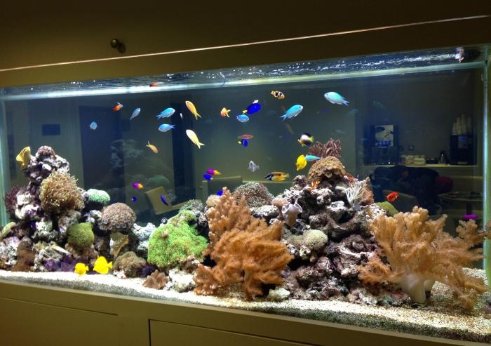 Tropical Marine Reef Aquarium - Surrey