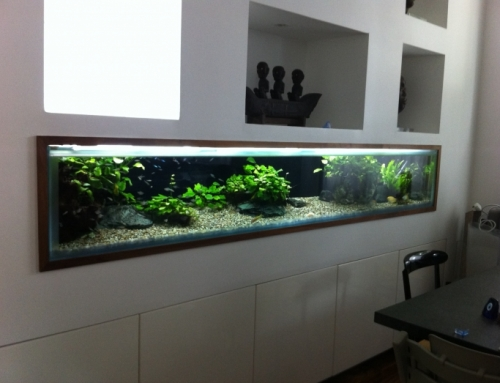 Acrylic vs Glass Aquarium – Which is better?