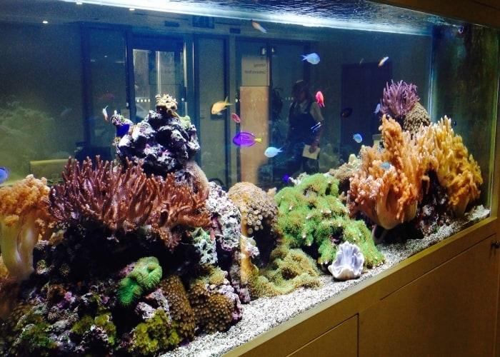 Tropical-Marine-Reef-aquarium