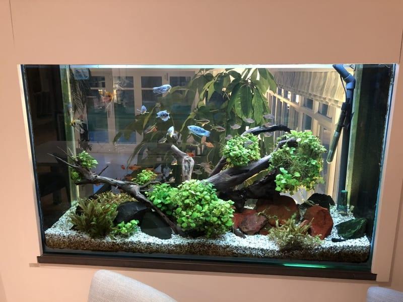 freshwater-planted-aquarium
