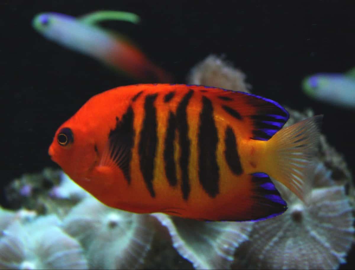aquarium livestock image