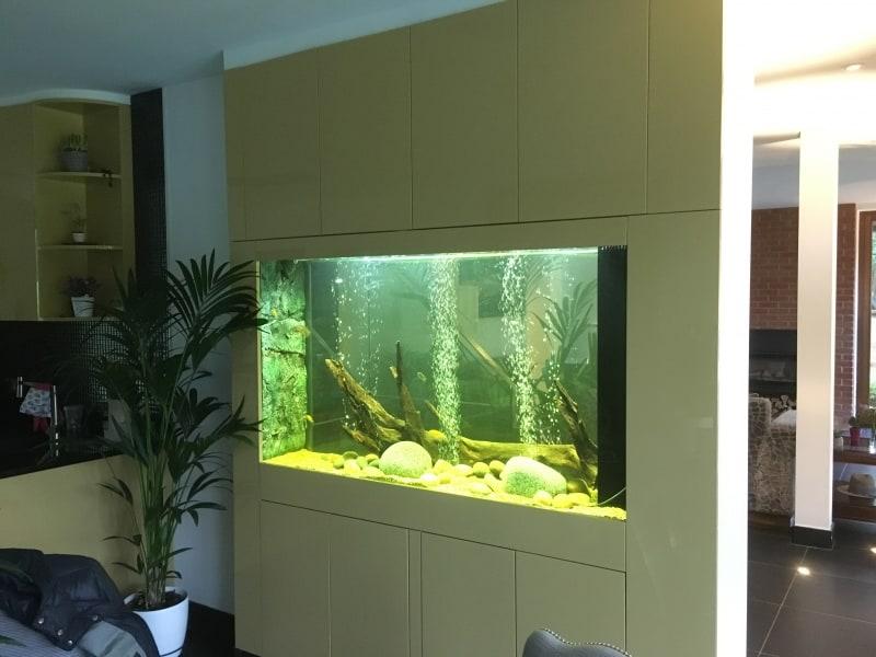 Malawi freshwater aquarium
