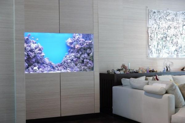 stunning home aquarium